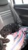Berta verschläft ihre erste große Reise. Frida liegt neben ihr.