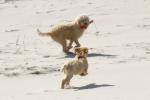 Bjelle und Ylvi spielen am Strand.