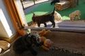 Bengel möchte Teddy unbedingt mitnehmen.